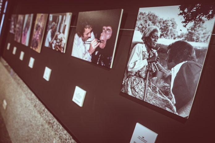 Detalle de la exposición dedicada a Stan Winston en el Festival Isla Calavera 2020.